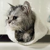 cat_flea_shampoo